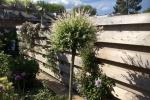 gardenlogs (11)