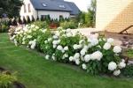 gardenlogs (12)
