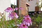 kleinegarten (4)