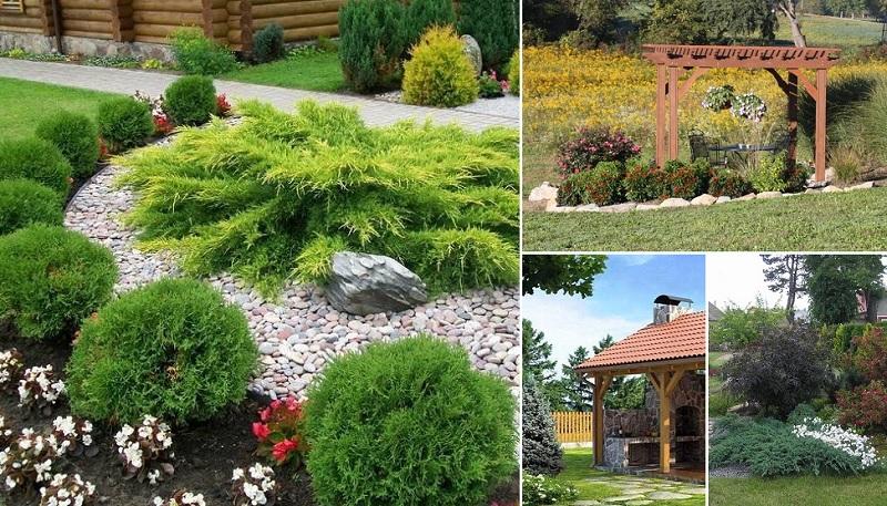 skaistu dārzu foto